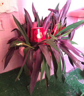 plant toilet2